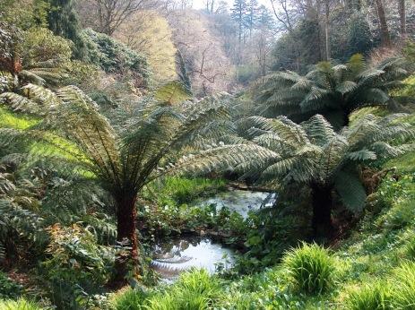 tree ferns Glendurgan
