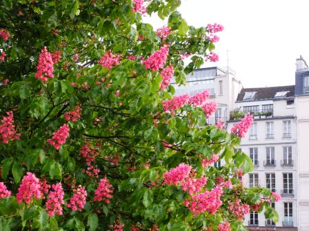 horse chestnut � earth laughs in flowers