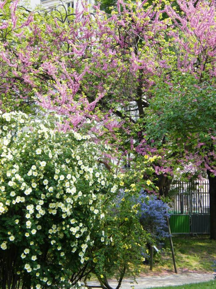 le jardin de plantes