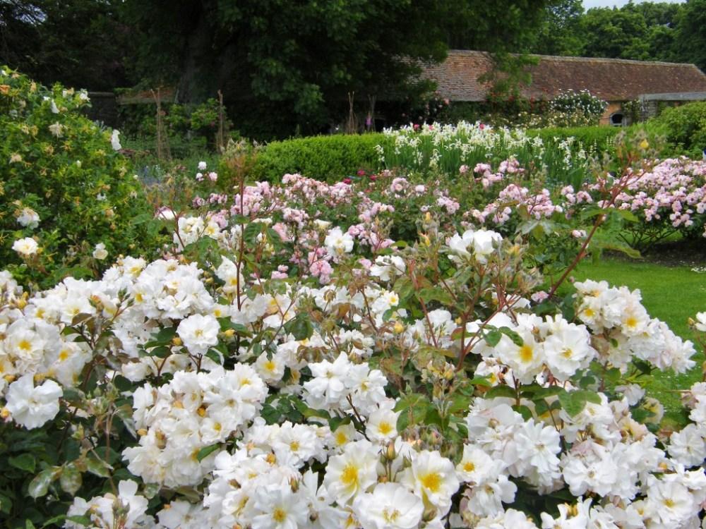rose garden at barrington