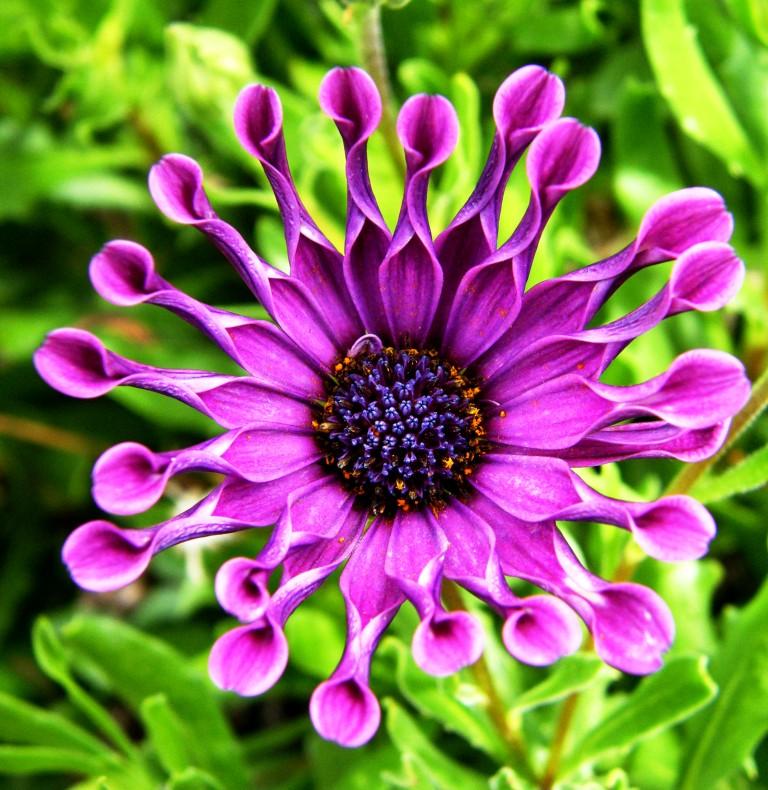 whirligig Nasinga Purple variety