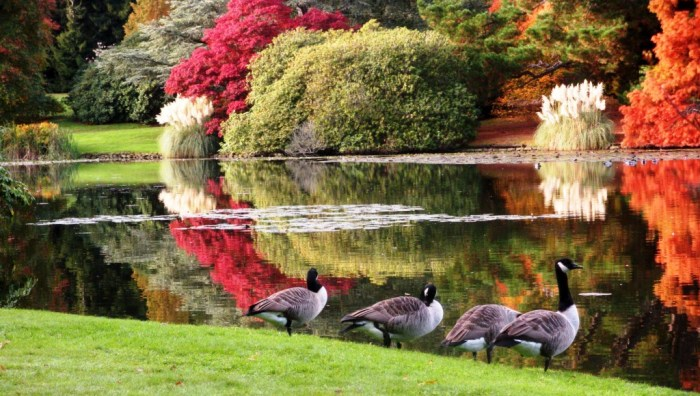 sheffield park view