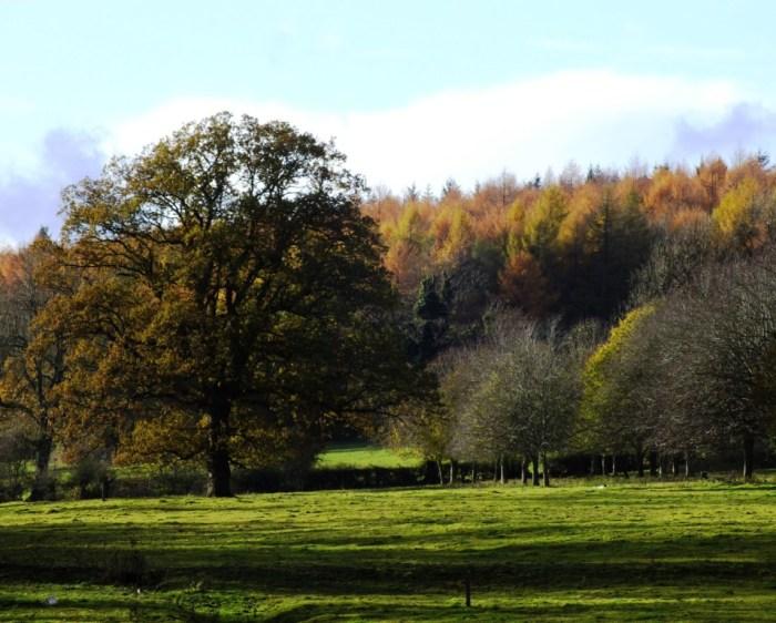 Croft Castle view