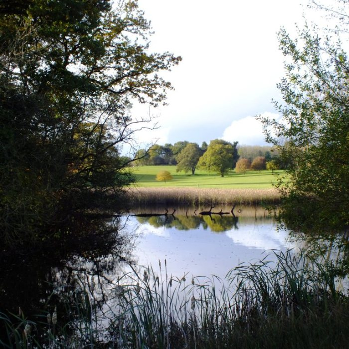 Lake at Berrington Hall