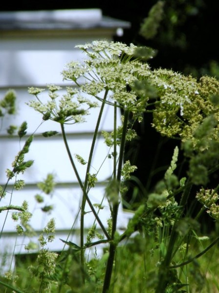 In the Wildflower Meadow