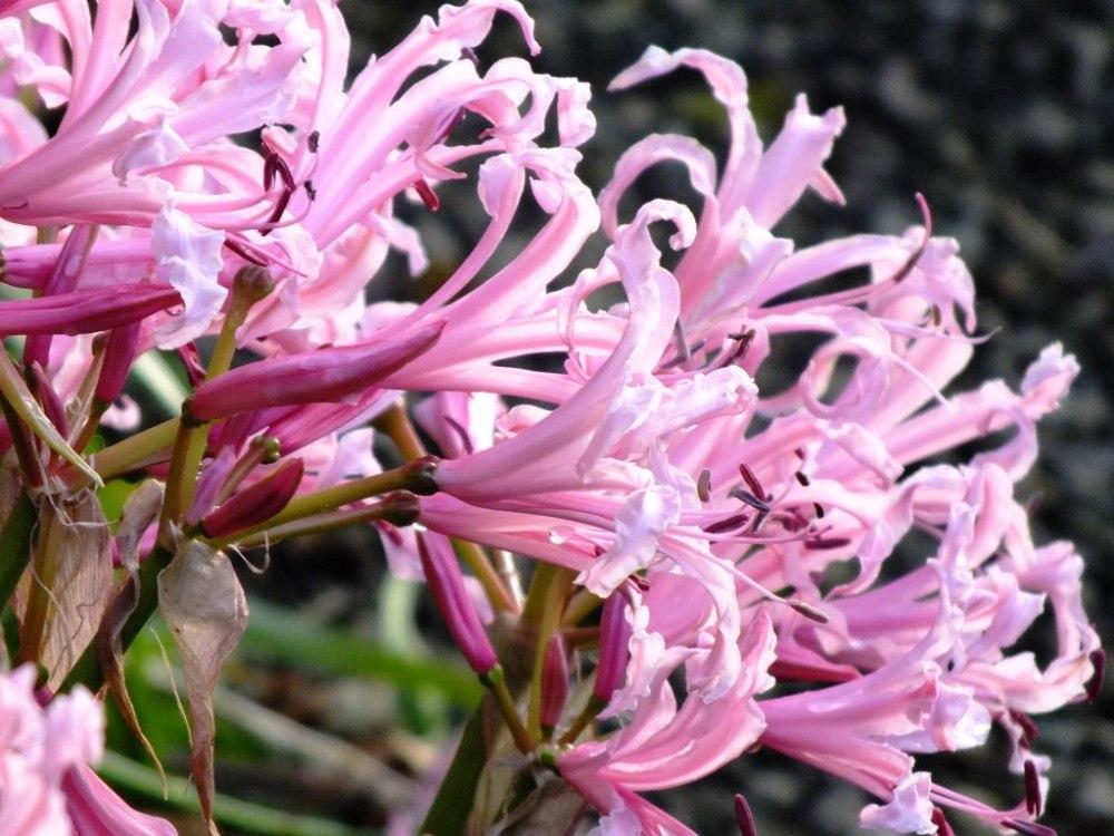 Beautiful Swamp Lily