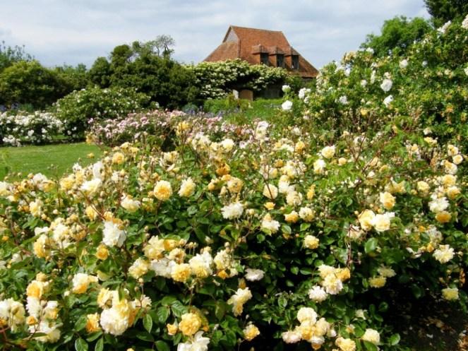 Rose and Iris Garden