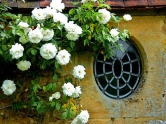 Roses - Strode House