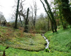 Native Woodland and Stream