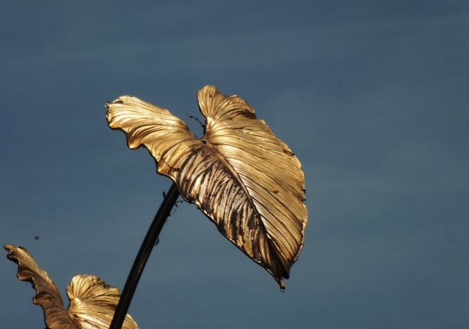 Bronze Philodendrun Leaf