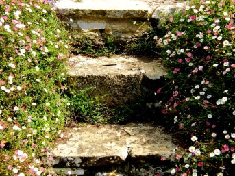 Steps through Santa Barbara Dasies