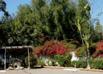 Bougainvillea and Indian shelter