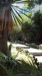 Xerophyte plants