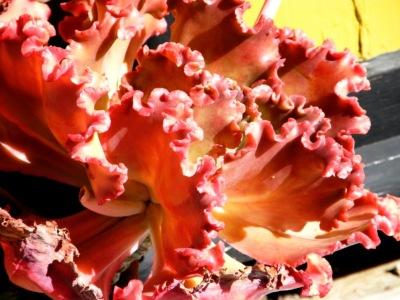 Succulent (2)