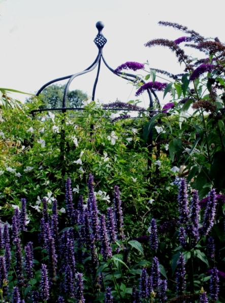 Agastache and Buddleia (the Blues)