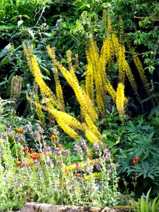 F = Foxtail Lily