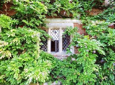 Window in Wisteria