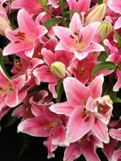 L = Lilies (2)