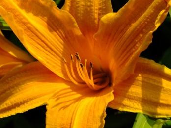 L = Lily (2)