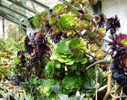S = Succulents (6)