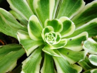 S = Succulents (9)