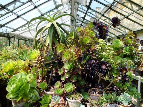 S = Succulents