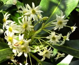 Beautiful tropical flowers
