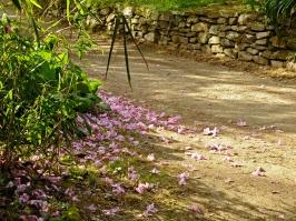 Pretty pink path