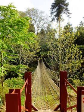 The rope-bridge