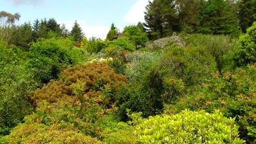 View of the Rock Garden