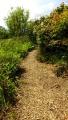 Pathways around the Lochans