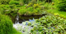 Lochan and Water-lilies