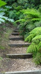 Steps through the tree ferns