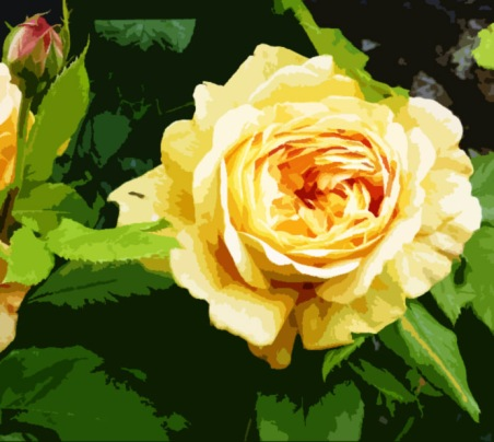 A golden rose