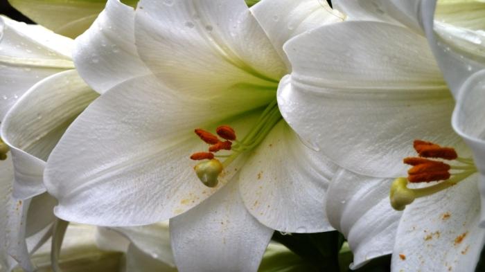 garden photography: lusciouslilies