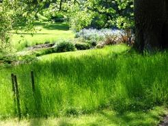 Lush green meadows