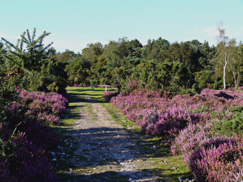 late august on hindhead common small