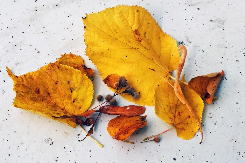 autumn-palatte