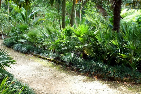 Palms in the jungle