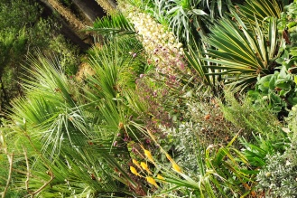 More Palms and Yuccas