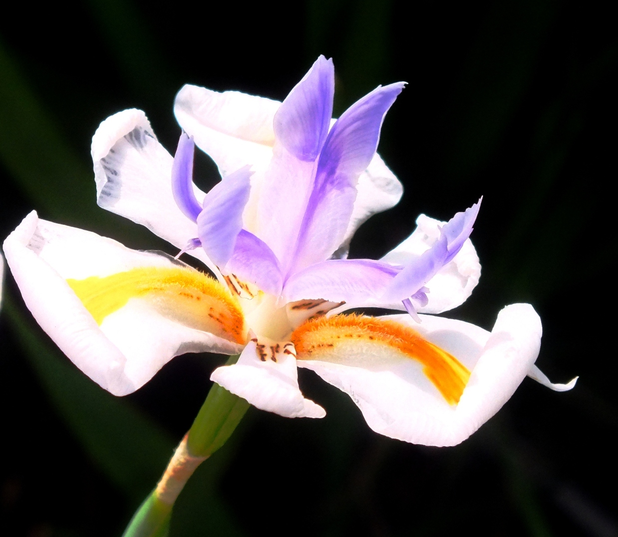Flowers in australia 1 earth laughs in flowers lily izmirmasajfo