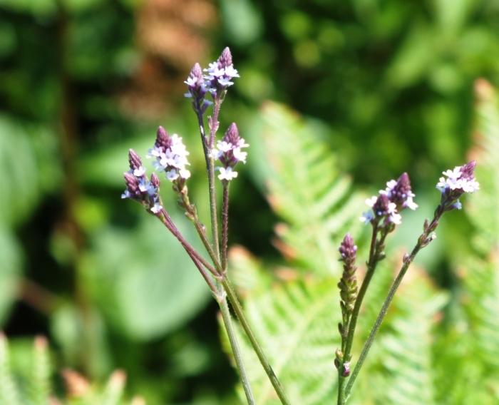 mauve flowere