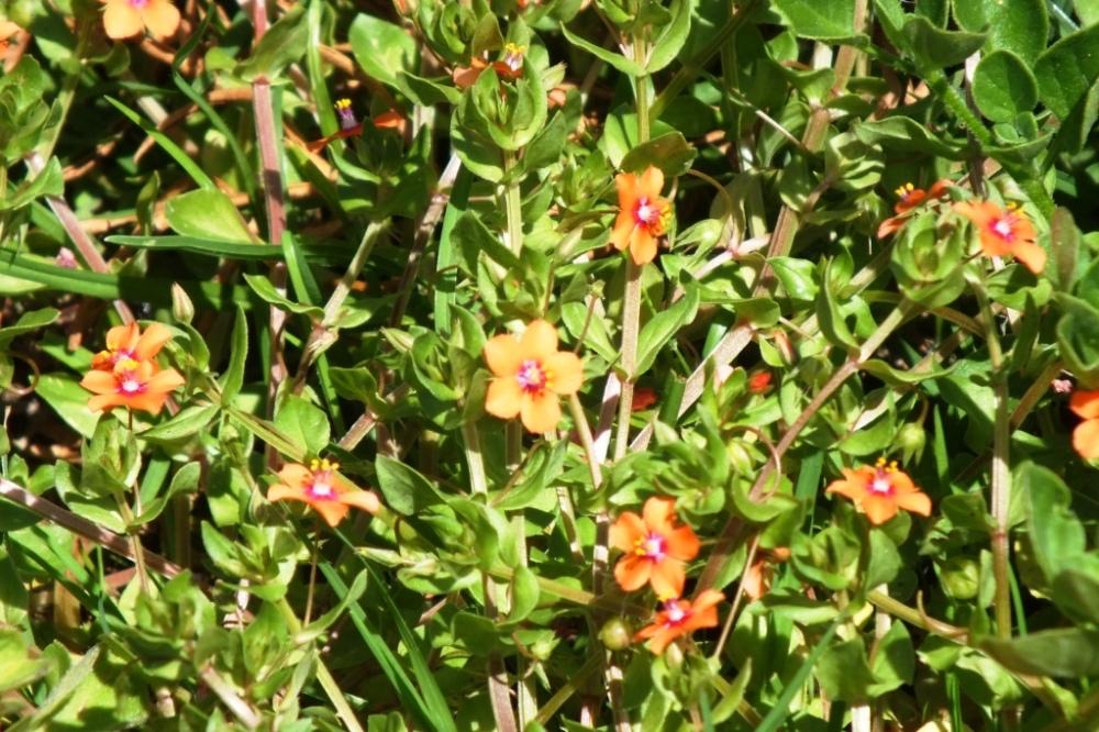 orange low flowers
