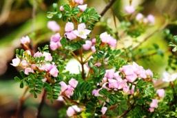 pink flower (1)