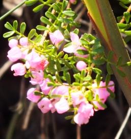 pink flower (2)