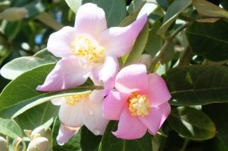 pink flower (4)