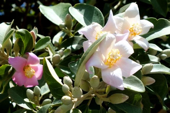 pink flower (5)