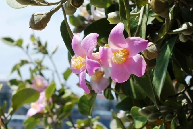 pink flower (6)