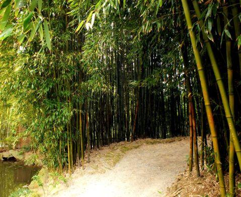 A Bamboo Glade