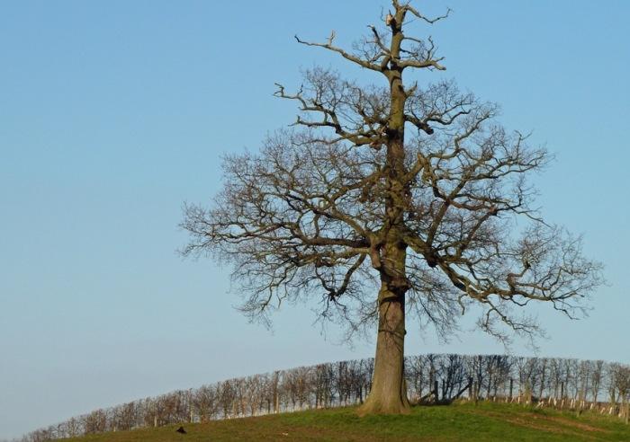 7. tree texture COPY